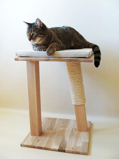 Arbre à chat 'Oxalis'