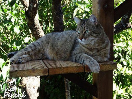 Arbre à chat extérieur Medium